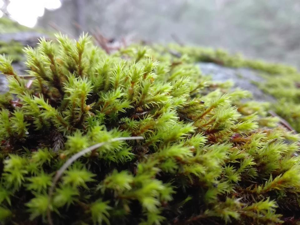 Cursos sobre fauna y floraen la Val d'Aran con ETEVA